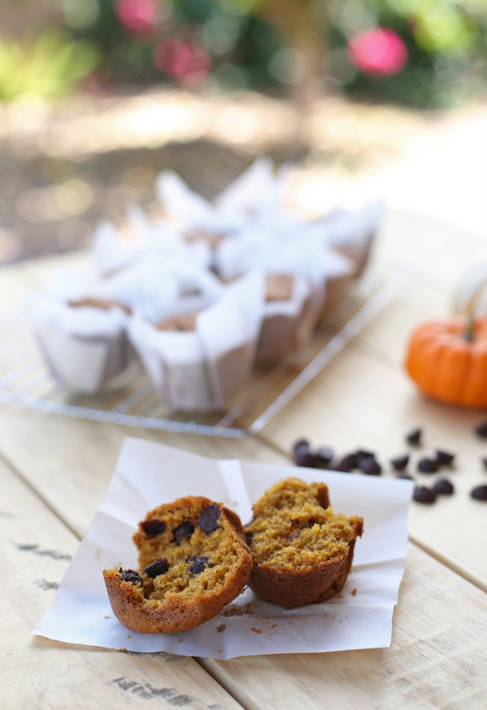 Super easy chocolate chip pumpkin muffins. All you need is one bowl and they're ready to go in the oven in less than ten minutes!
